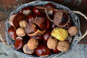 chestnut-471288_1280